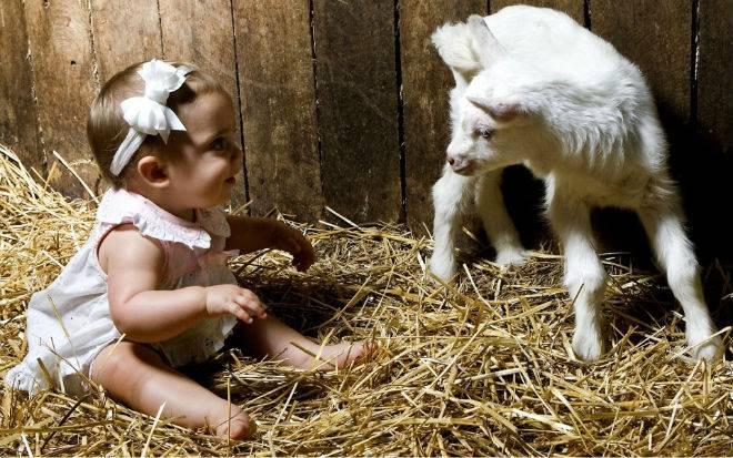 Примеры кличек для козы и список 200+ имен для мальчиков и девочек