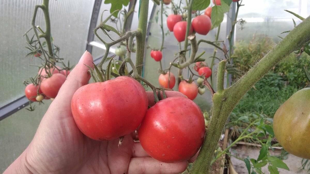 Суперфосфат: применение удобрения на огороде и в саду, состав, нормы внесения, подкормка рассады, томатов, ягод, плодовых деревьев, отзывы
