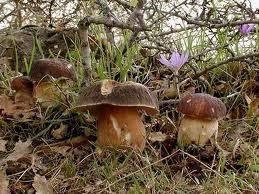 Топ 10 грибов из березовой посадки или леса