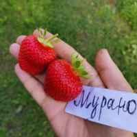 Клубника: описание ягоды и самых популярных лучших сортов, выращивание в саду и на даче, процесс посадки, ухода и выращивания