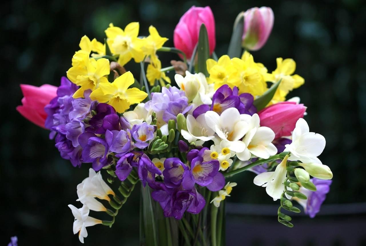 Цветок фрезия, посадка и уход, фото растения