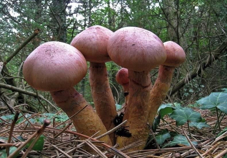 Съедобные грибы – список, фото, название, описание, видео, когда и где растут  - «как и почему»