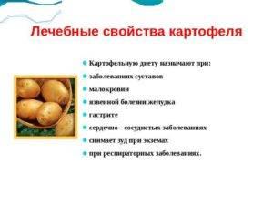 Вкусный и питательный картофель: вся правда о его пользе и возможном вреде