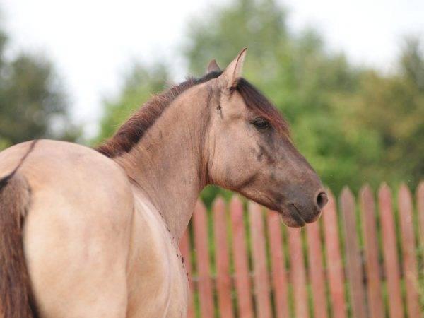 Масти лошадей: фото, определение масти лошадей, основные масти, редкие масти