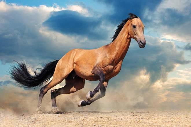 Красивые имена и клички лошадей: как назвать жеребцов и кобыл, список популярных имен для мальчиков и девочек на русском и английском