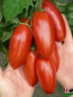 Находка для гурманов — томат «московский деликатес»: преимущества перед другими сортами помидоров