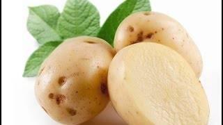 Сорт «зекура» — картофель прошлого века, но стойкий и вкусный