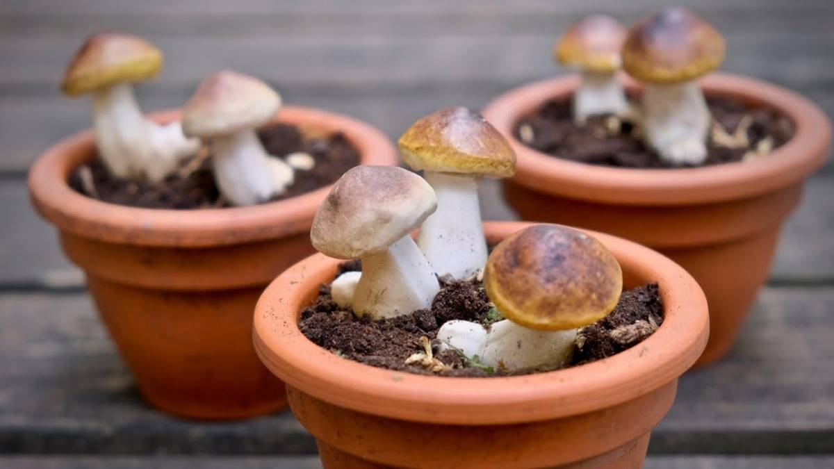 Выращивание грибов как бизнес: виды, оборудование, бизнес-план