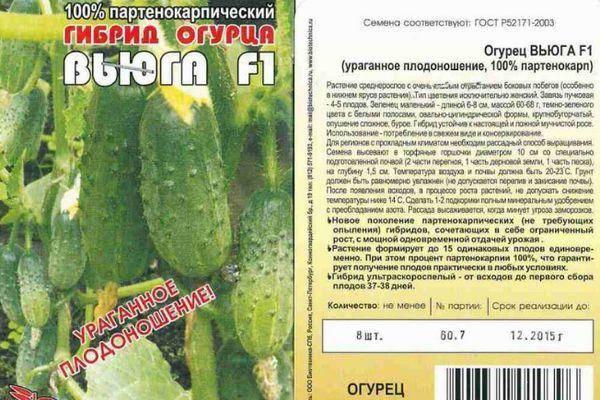 Огурец вьюга f1: описание сорта