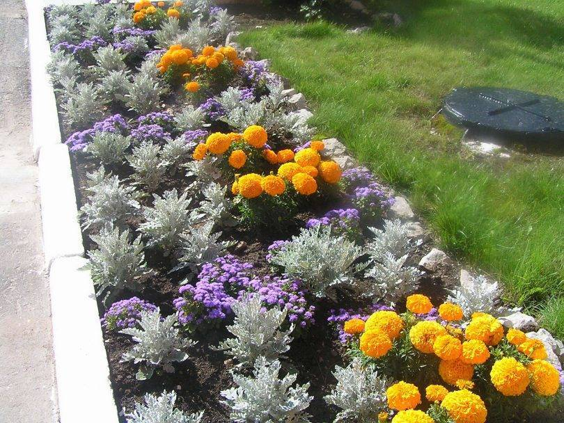 Рабатки (56 фото): что это такое? клумбы из многолетников и однолетников в ландшафтном дизайне, схема и подбор растений, простые рабатки с розами и другими цветами