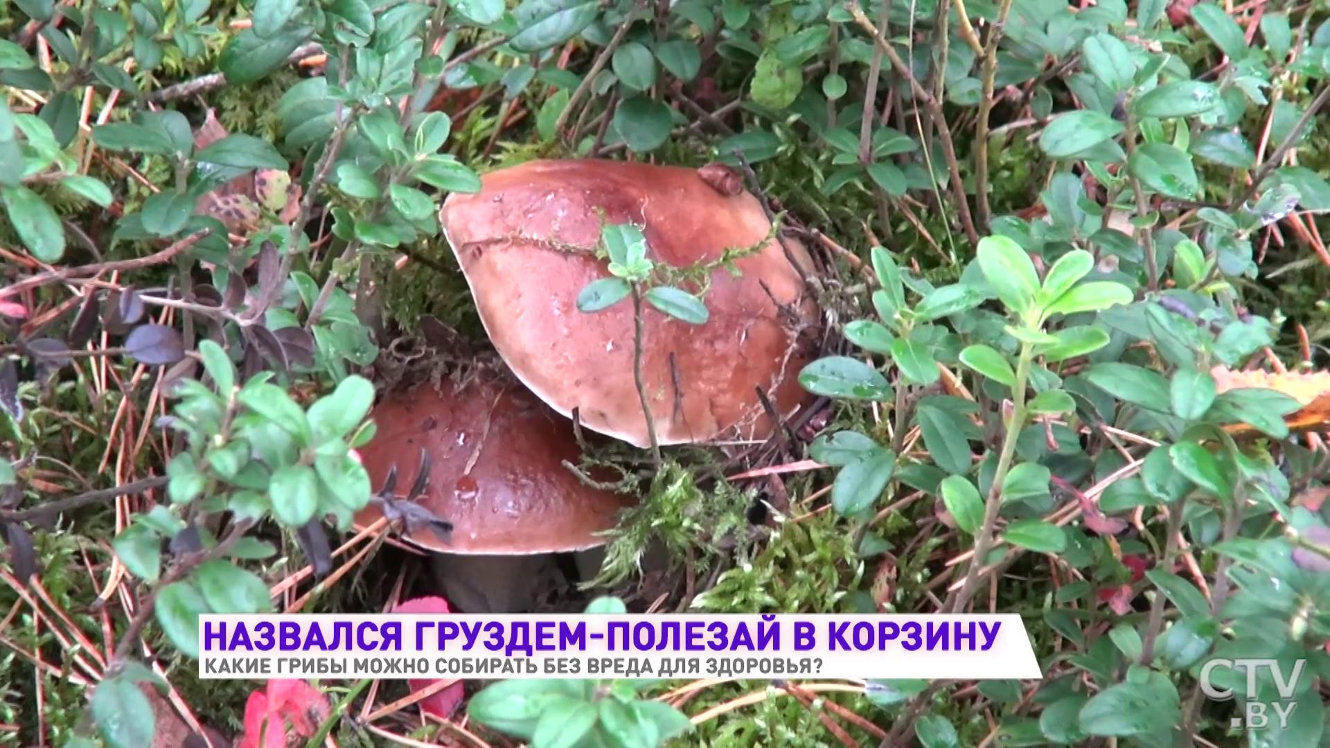 Как измерить радиацию в грибах