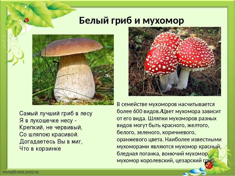 Самые красивые грибы в мире: фото, факты, описание