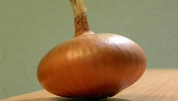 Лук бессоновский: самый неприхотливый сорт средней и южной полосы россии