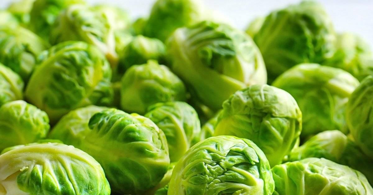Выращивание брюссельской капусты. посев семян. рассада. удобрение, подкормка, полив. агротехнические технологии