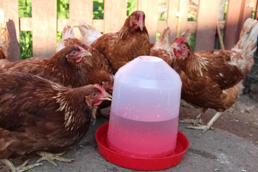 Способы изготовления ниппельной, вакуумной поилки для кур с подогревом в зимний период