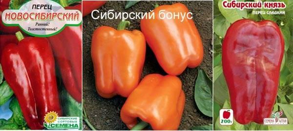 Лучшие сорта перца для сибири отзывы | мой сад и огород