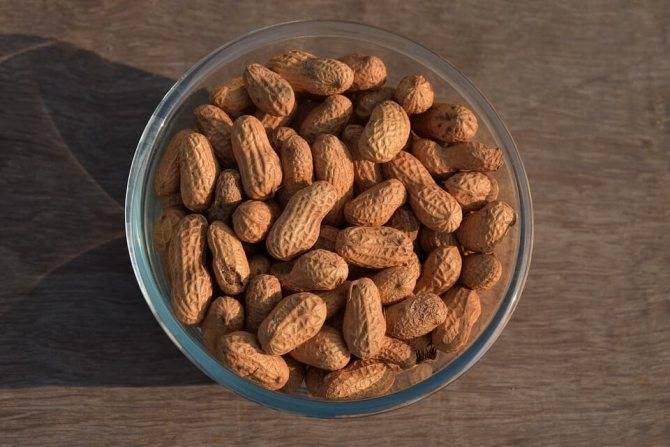 Выращивание земляного ореха: нюансы и тонкости процесса