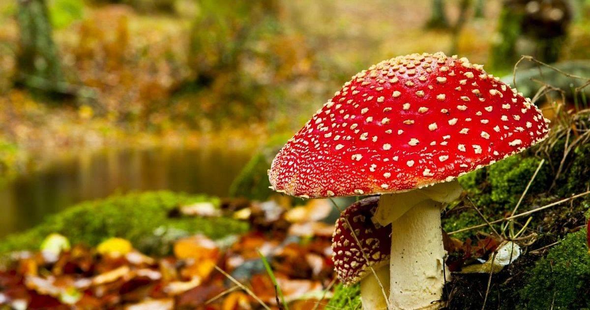 Симптомы отравления ядовитыми и съедобными грибами   компетентно о здоровье на ilive