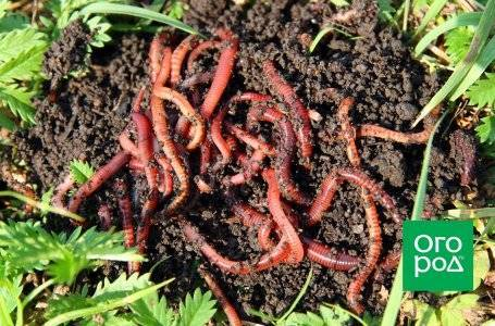Жидкий биогумус: инструкция по применению для овощей и других растений. как разводить? состав и подкормка универсальным удобрением