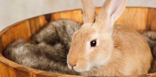 Разведение кроликов: уход и содержание в домашних условиях для начинающих