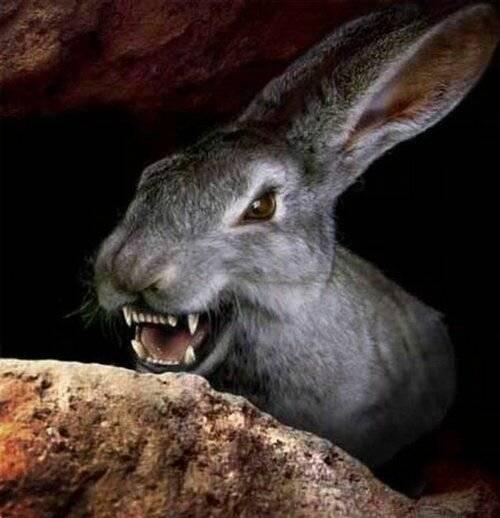Чем питаются зайцы: что едят — selok.info