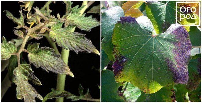 Фосфорные удобрения: виды и названия, применение, значение для растений, как сделать своими руками
