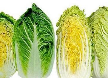 Пекинская капуста - капустные - овощеводство - растениеводство - собственник