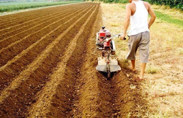 Посадка картофеля в гребни: методика и особенности, видео