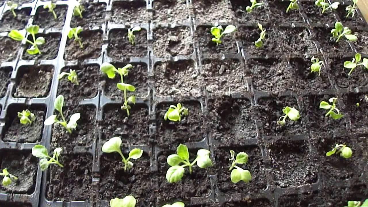 Топ-5 причин почему у растений скручиваются листья