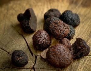 Трюфели: эксклюзивные грибы или «белый алмаз» кулинарии