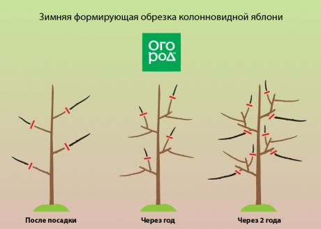 Как обрезать яблоню правильно: видео и схемы обрезки по годам для новичков
