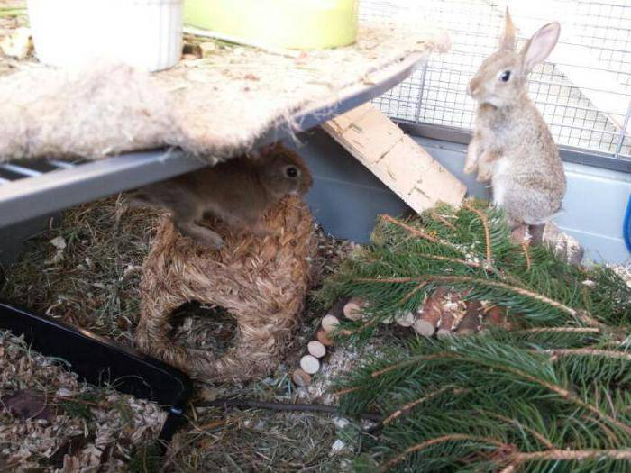 Какие ветки можно давать кроликам: обзор и фото какие ветки можно давать кроликам: обзор и фото