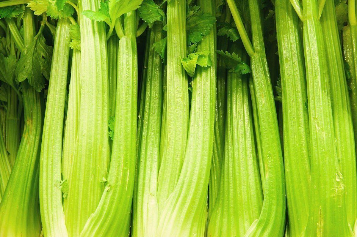 Чем обработать капусту от вредителей (народные средства)