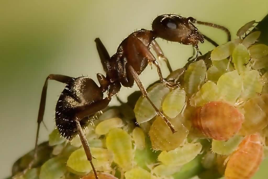 Вредители орхидей и борьба с ними