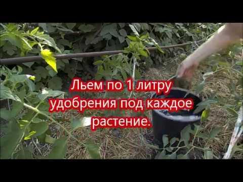 Польза аммиака для помидоров