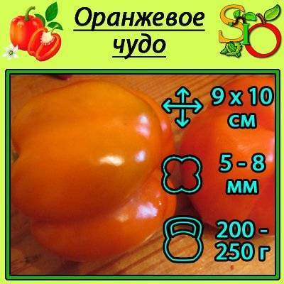Перец оранжевое чудо – характеристика и описание сорта, фото, урожайность, отзывы огородников