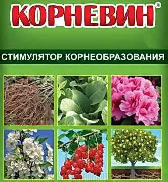 Гетероауксин - самый мощный стимулятор роста любых растений