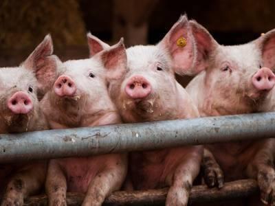 Нематодозы животных: лечение, симптомы, профилактика