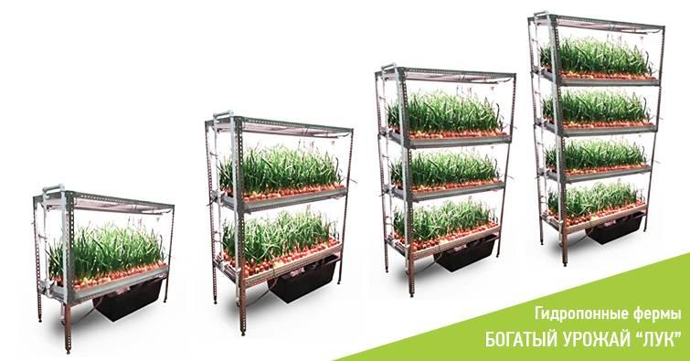 Бизнес на выращивании зеленого лука методом гидропоники: прибыль круглый год!