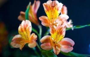 Различные садовые орхидеи: описание и уход в домашних условиях