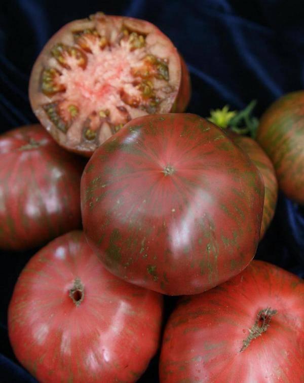 Томат полосатый шоколад: отзывы, фото куста, урожайность и описание сорта