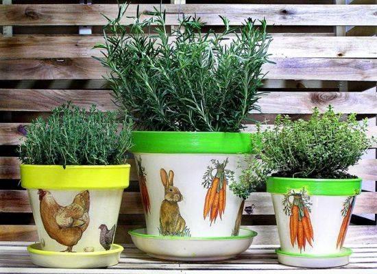 Выращивание розмарина в квартире: посадка и уход в горшке