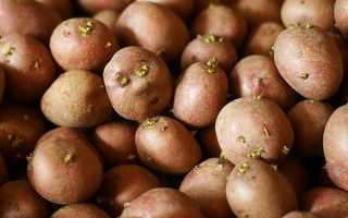 Посадка картофеля методом кизимы