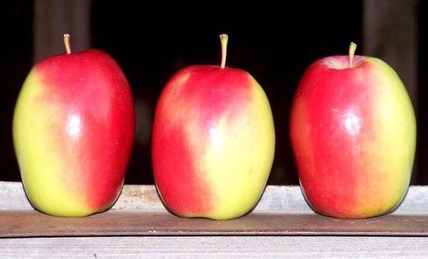 Яблоня синап орловский: описание позднезимнего сорта, фото и отзывы садоводов