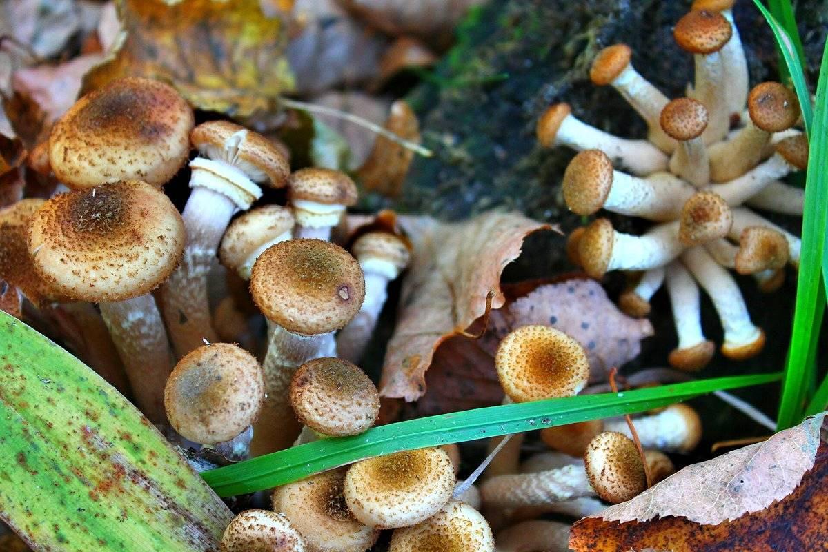 Список грибных мест в краснодарском крае для любителей тихой охоты