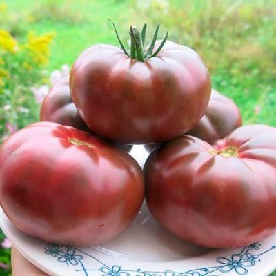 ᐉ томат «черный крым» или «черный крымский»: описание сорта, фото и рекомендации по выращиванию помидоры - orensad198.ru