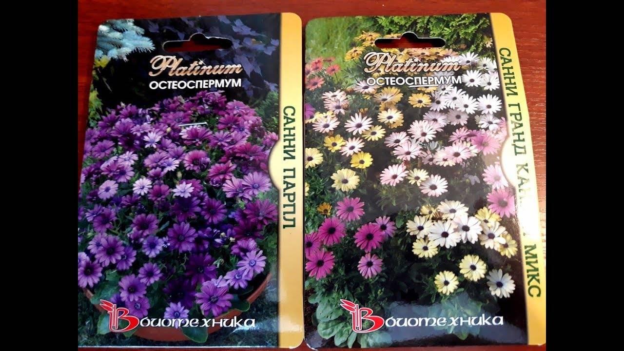 Остеоспермум: выращивание из семян, виды и сорта