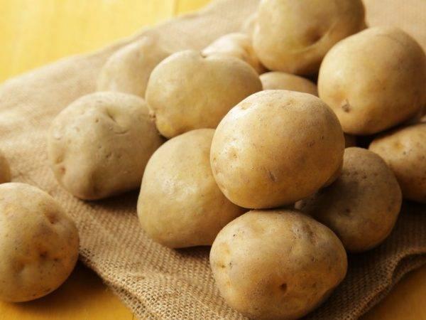 Картофель боровичок: описание сорта, посадка, уход, фото, отзывы