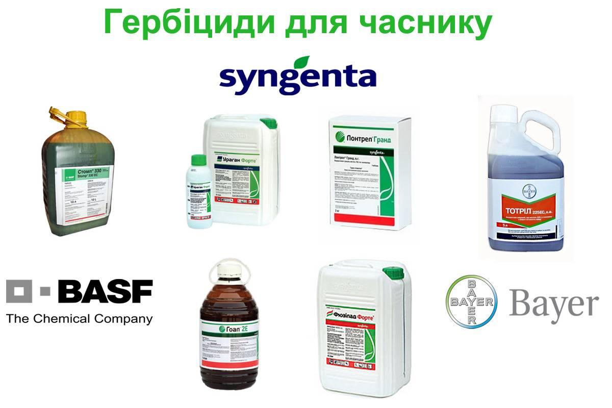 Какие гербициды выбрать для чеснока