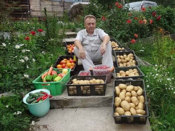 Урожайные грядки Игоря Лядова. Раскроем все секреты